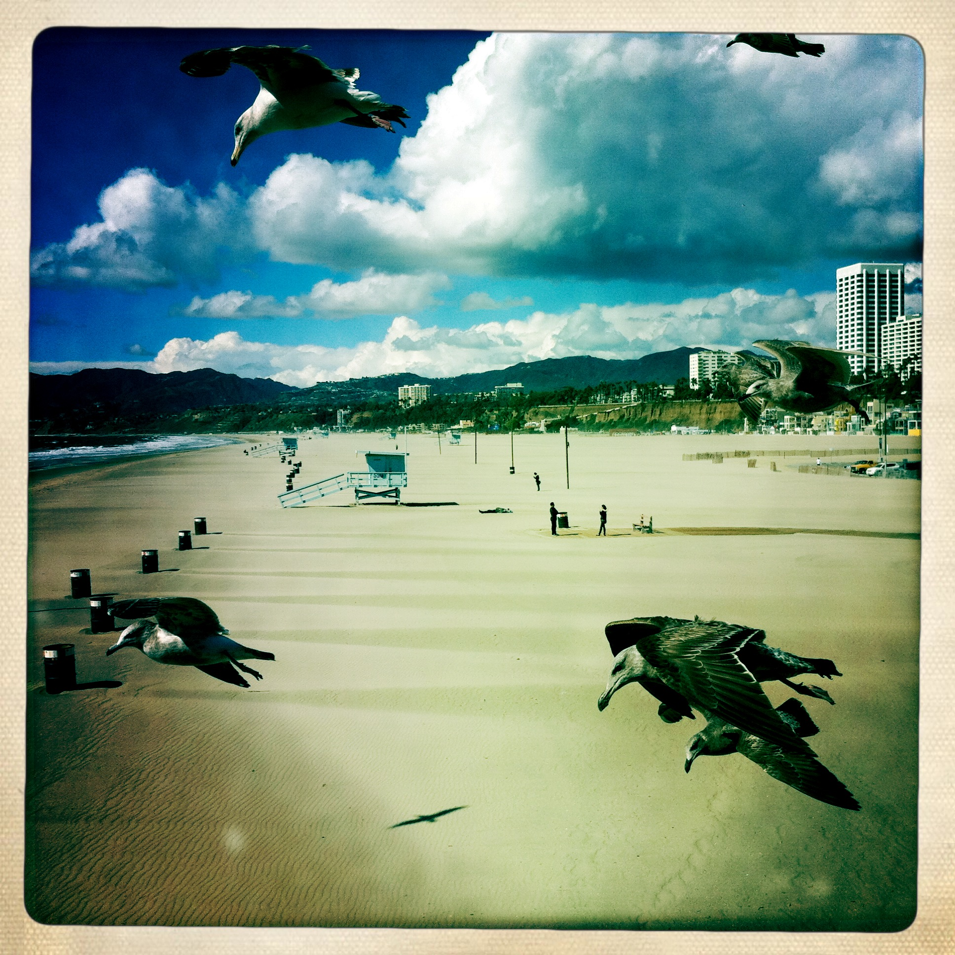 Birds at Santa Monica